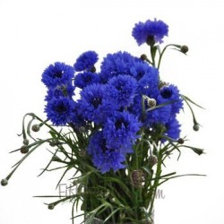 ASTER MOV